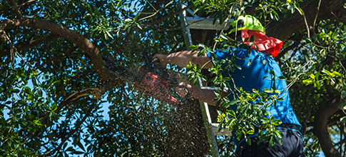 Same Day Mowing Service | Killeen,TX | Tree Trimming